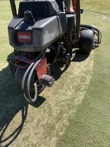 Verticutting seed grooves into the soil for bentgrass overseeding.