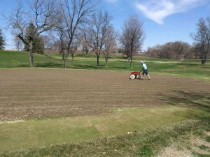 Drop seeding bentgrass over cores on #17 green as part of the overseeding process.
